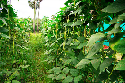 Freshly hand-picked fruits and vegetables cultivated by Kairali | Kairali-The Ayurvedic Healing Village